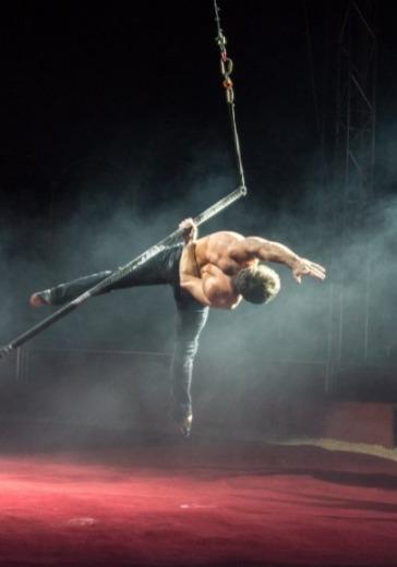Итальянский цирк Togni logo