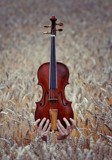 Мы-скрипачи! logo