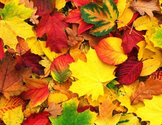 """""""Осенних листьев волшебство"""". Концертная программа,  посвященная празднованию  Международного дня пожилых людей и Дня учителя"""